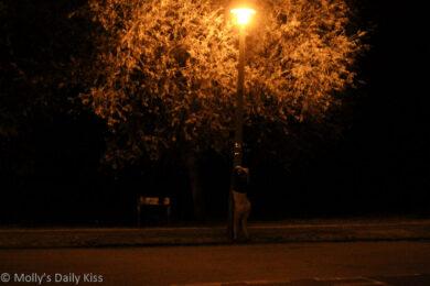 Underneath the street light