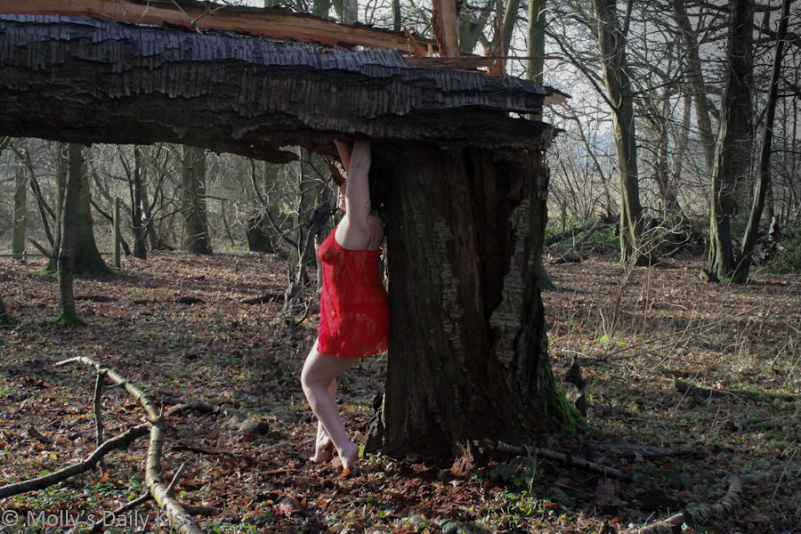 Sheltering beneath fallen tree in red lace