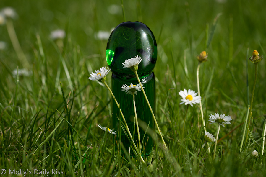 Green glass dildo in the daisys