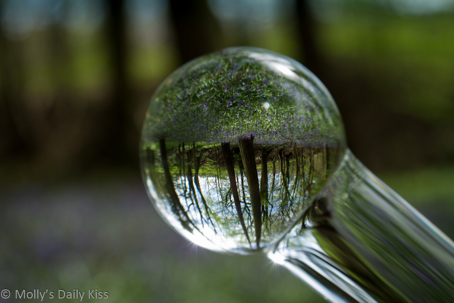 Reflection of woodland in end of glass dildo