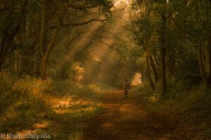 Fairytale woodland scene