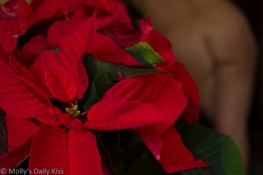 Poinsettia with naked woman behind it