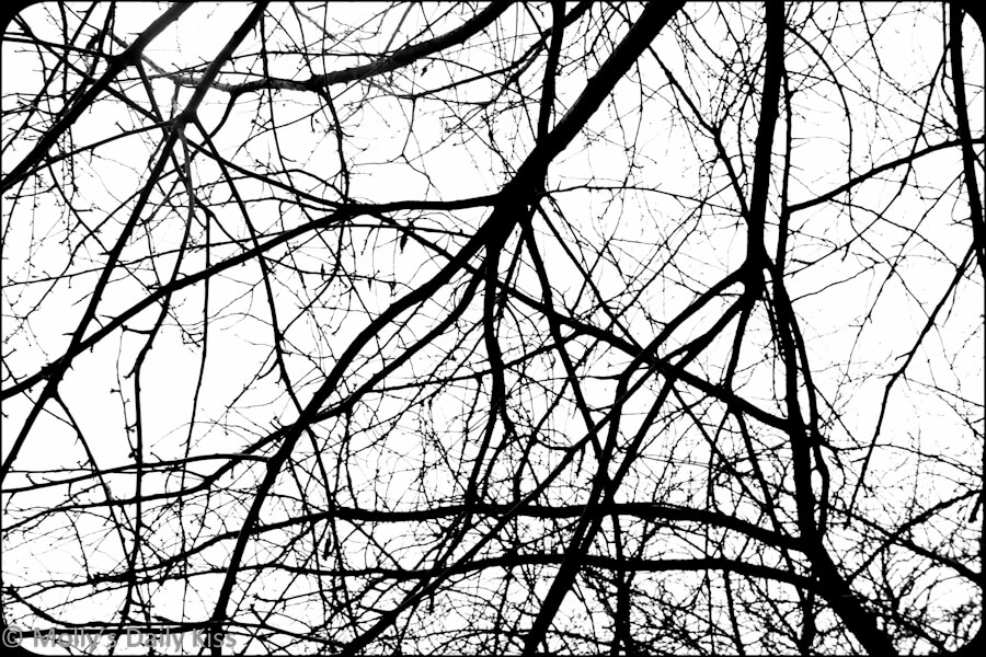 Silhouette of branches against white sky the represents Molly's safeword