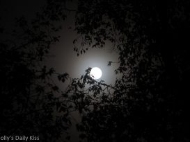 moonlight shining through leaves