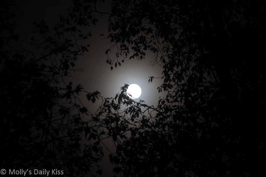 moonlight shining through leaves
