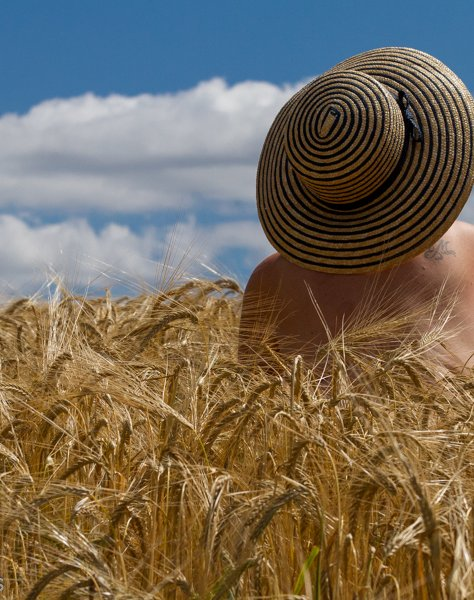 Molly in wheat field wearing a straw hat