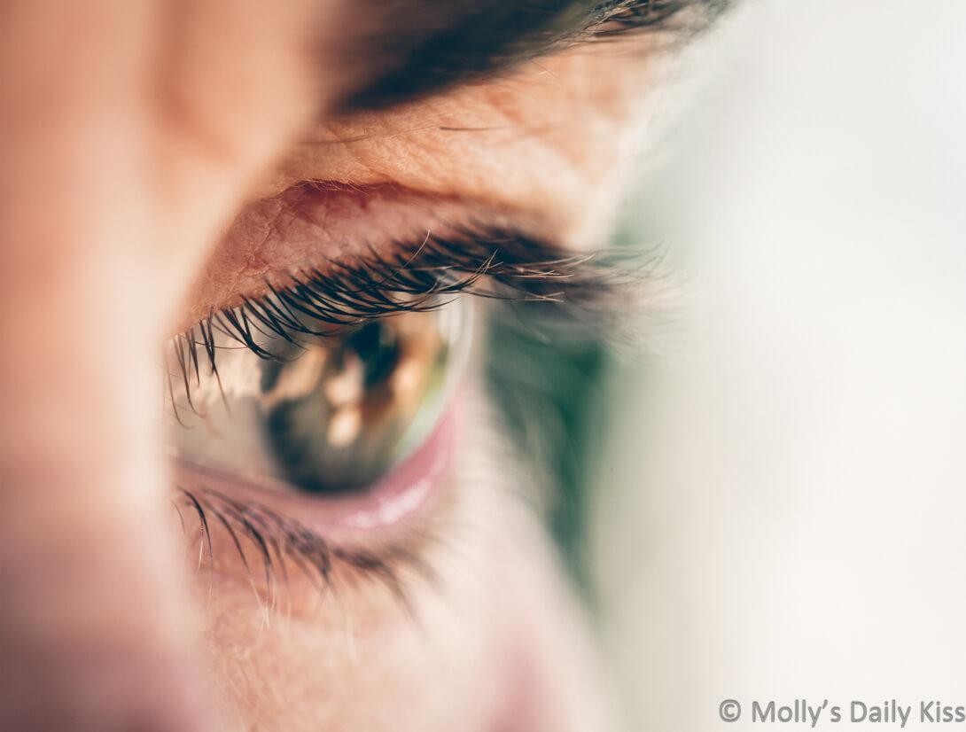 macro shot of mollys eye wth the eye lashes in focus