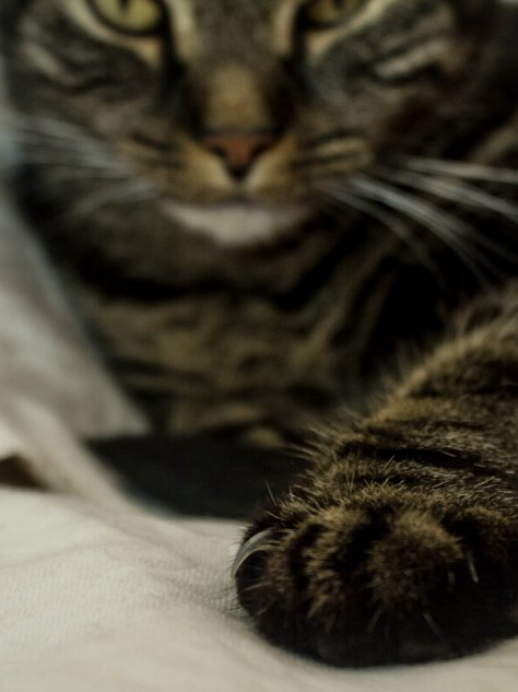 cat reaching it paw out towards camera for a post called pause from thinking