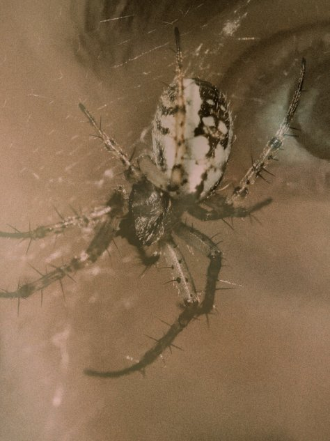 double exposure of spider over womans eyes