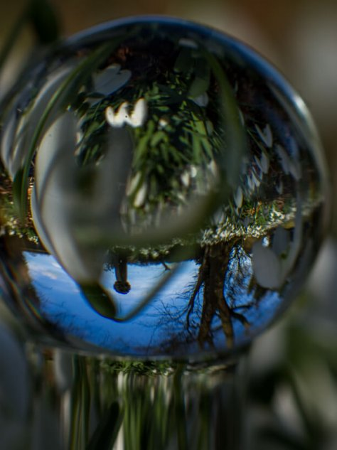 Snow drops and blue skies reflected in a glass dildo for a post called the sap is stirring
