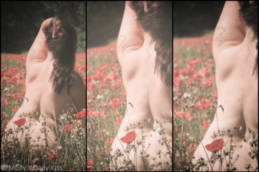Triptych of molly in a field of poppies on a summer day