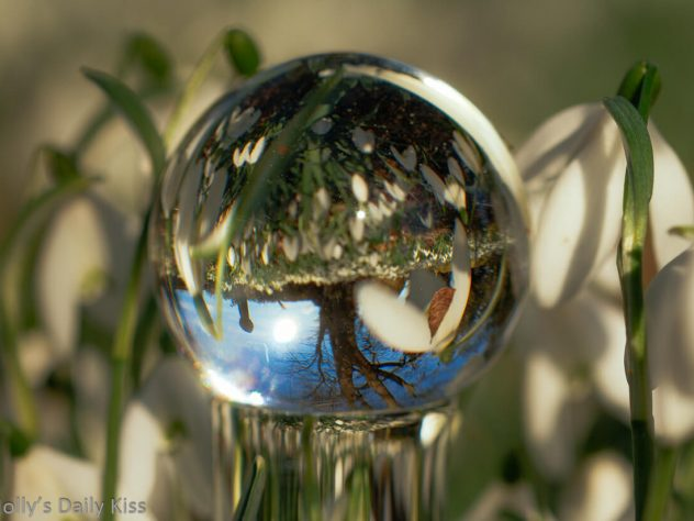 glass dildo in snowdrops with them reflected in the glass ball