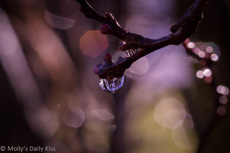 droplet of water on twig for post about intent v impact