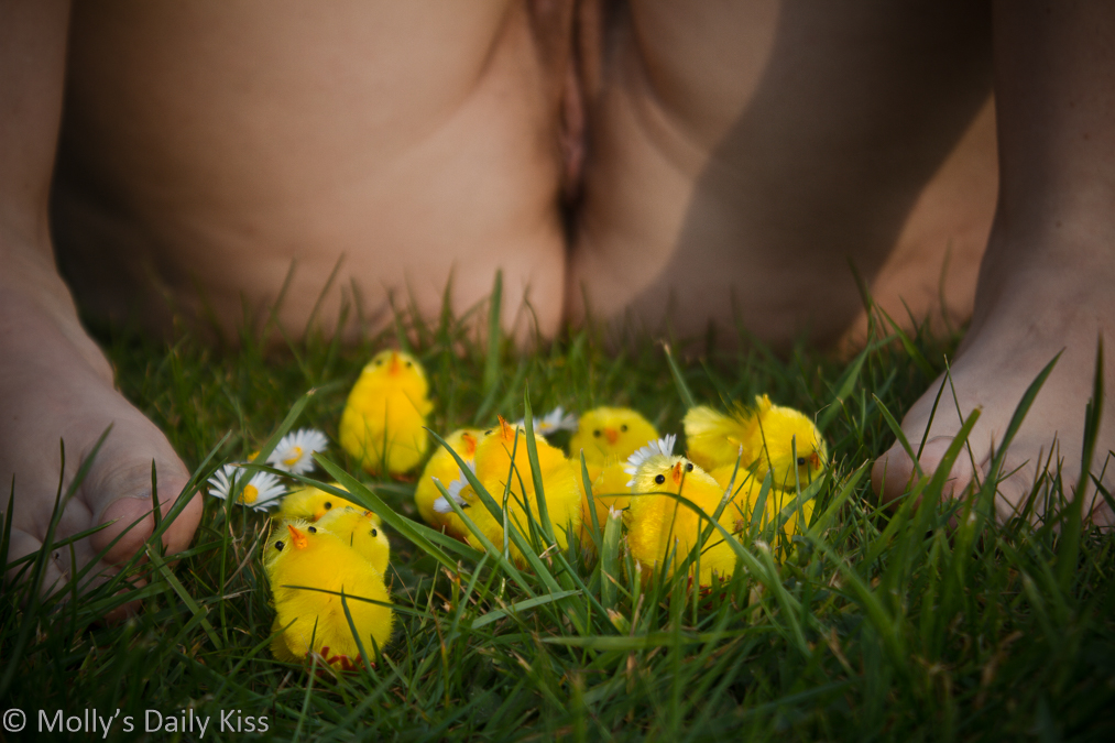 Molly with legs open and little yellow easter chicks by her feet