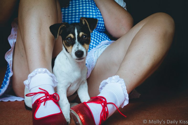 Molly wearing a Dorothy dress and red sparkly shoes with a little dog sitting inbetween her legs