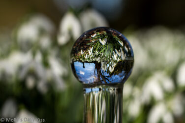 snowdrops inverted inside the hed of a glass dildo